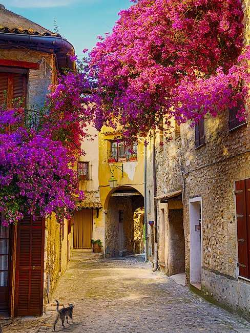 In Provence, the scent of flowers and herbs is in the air.