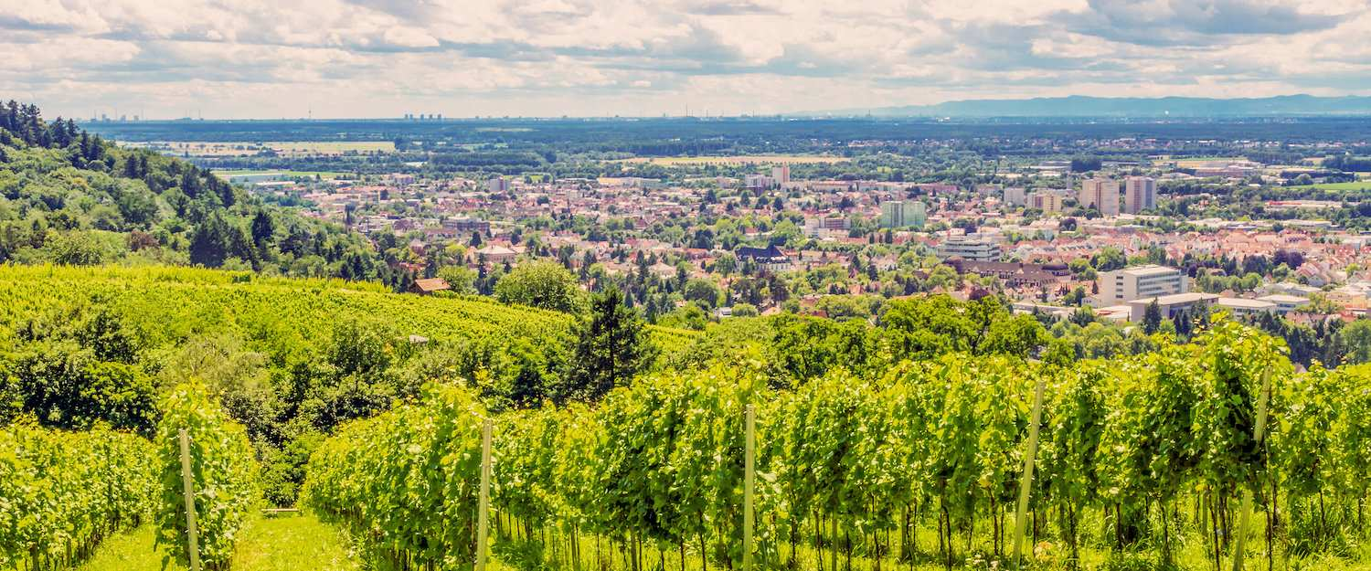 View of the vineyards before Bensheim