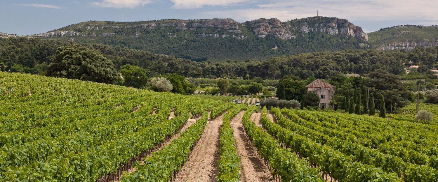 Vineyards of Cassis