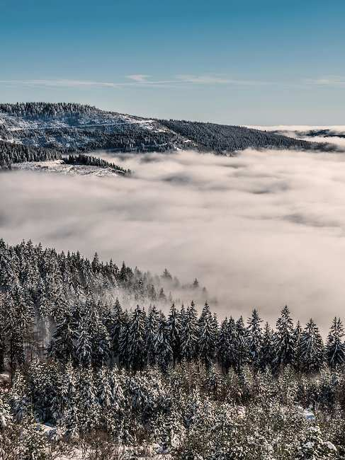 A snowy splendour: the Black Forest in winter.