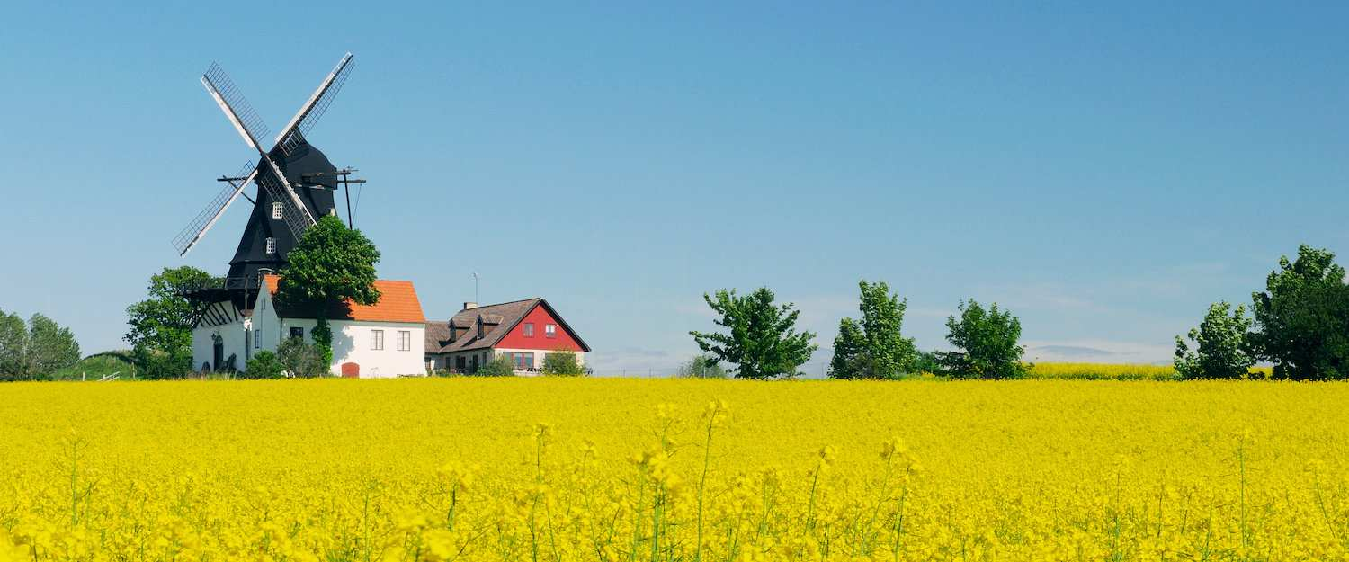 Rapeseed fields in Skåne
