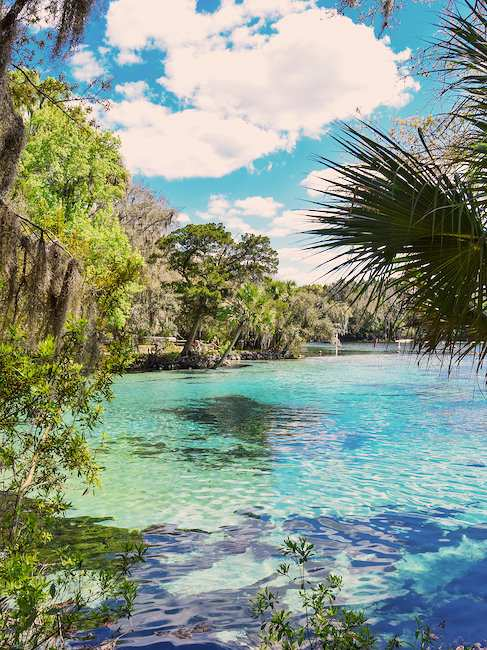 Silver Glen Springs in Florida